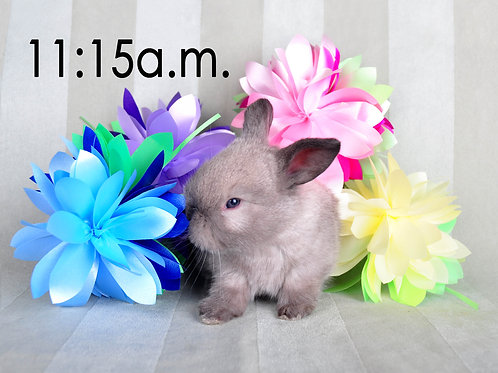 BUNNY EXPERIENCE - Saturday, April 3 @ 11:15 AM CT