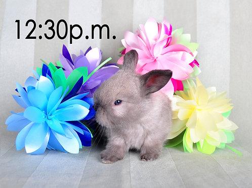 BUNNY EXPERIENCE - Saturday, April 3 @ 12:30 PM CT