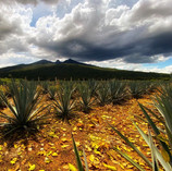 Agave, volcán y Tequila