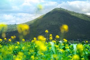 Cerro con Flores