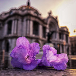 Amanecer lila