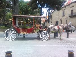 Las famosas calandrias de Guadalajara.