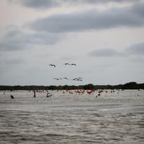 Atardecer entre Flamingos