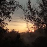 El bosque de Chapultepec