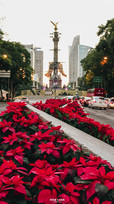 Reforma; sede de las Nochebuenas