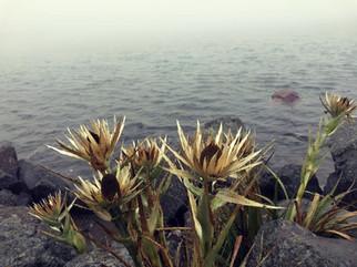 Flores de la montaña