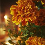 Flor de luz