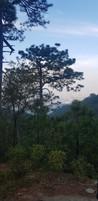 Parque Nacional de Chipinque