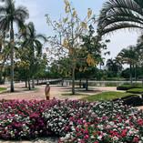 Primavera en Jardines es de México