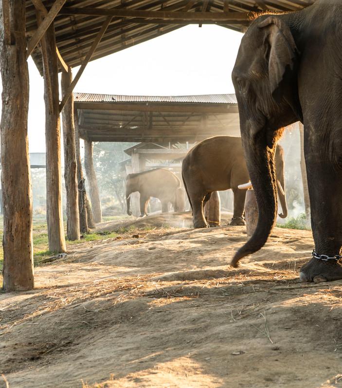 DSC03396Nepal Chitwan hati olifant_1.JPG
