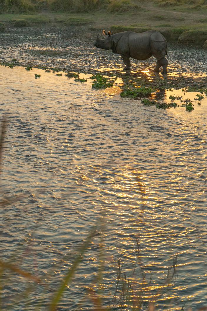 DSC03523Nepal Chitwan rhino jungle river