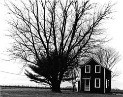 BigTree Little House