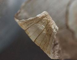 Old Leaf 3