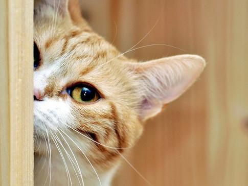 5 Dicas para diminuir o cheiro dos pets em casa