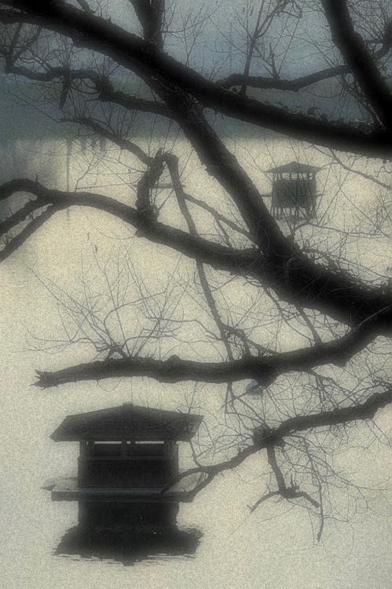 Swan Houses-web
