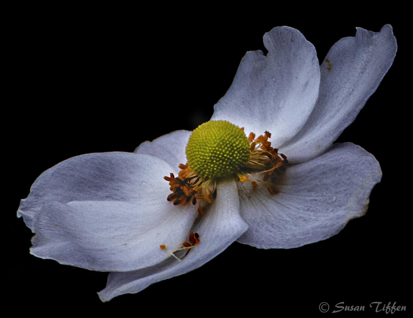 Falls Last Flower