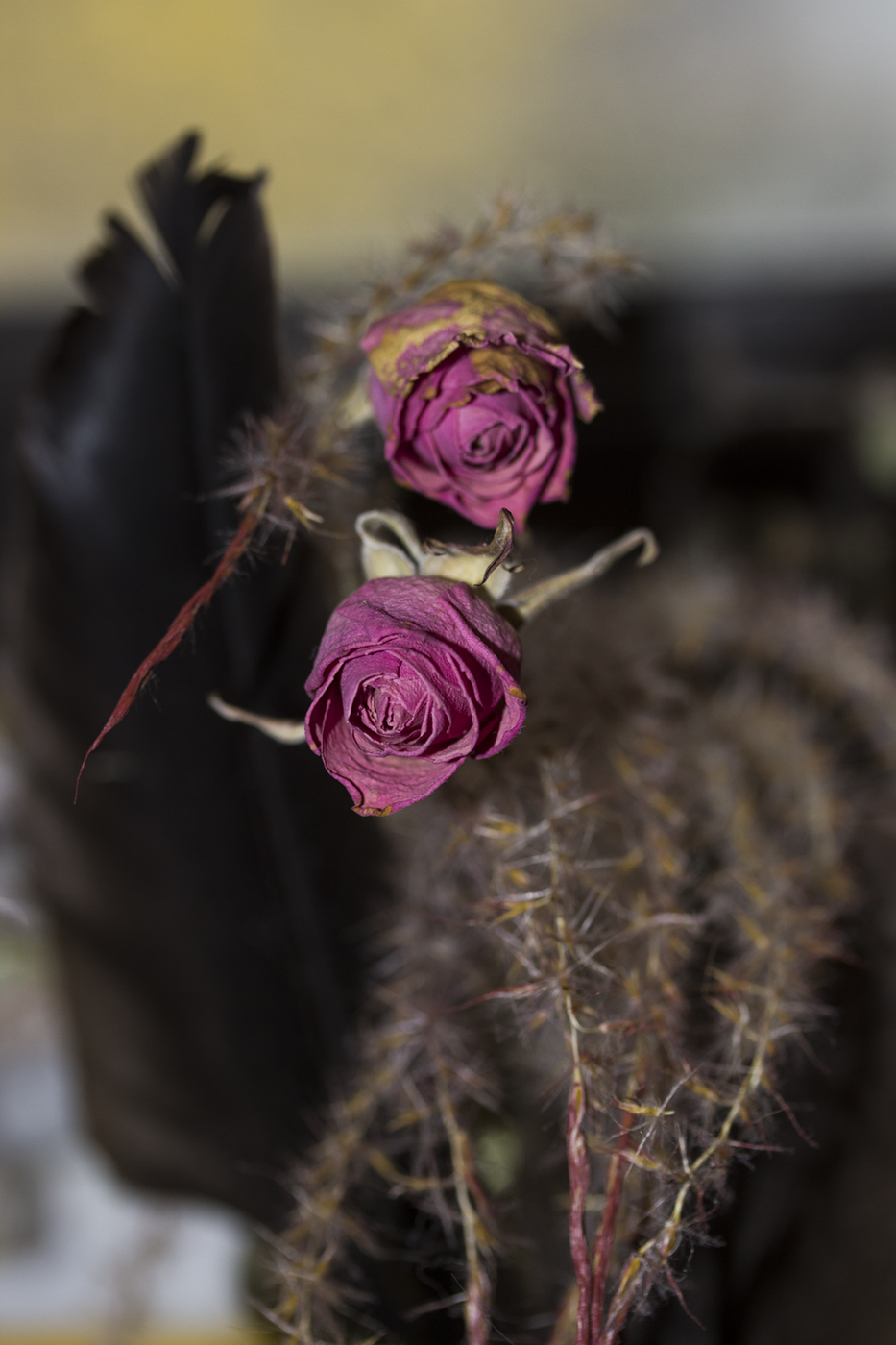 2 Old Red Roses w Marsh Grass