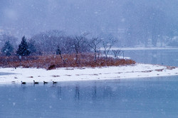 Snowy Island in Cold Spring Harbor