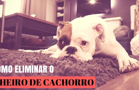 Como eliminar o cheiro de cachorro de casa?