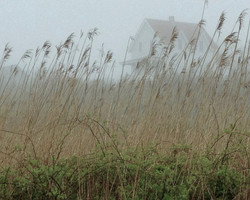 Block Island House and Grass-web