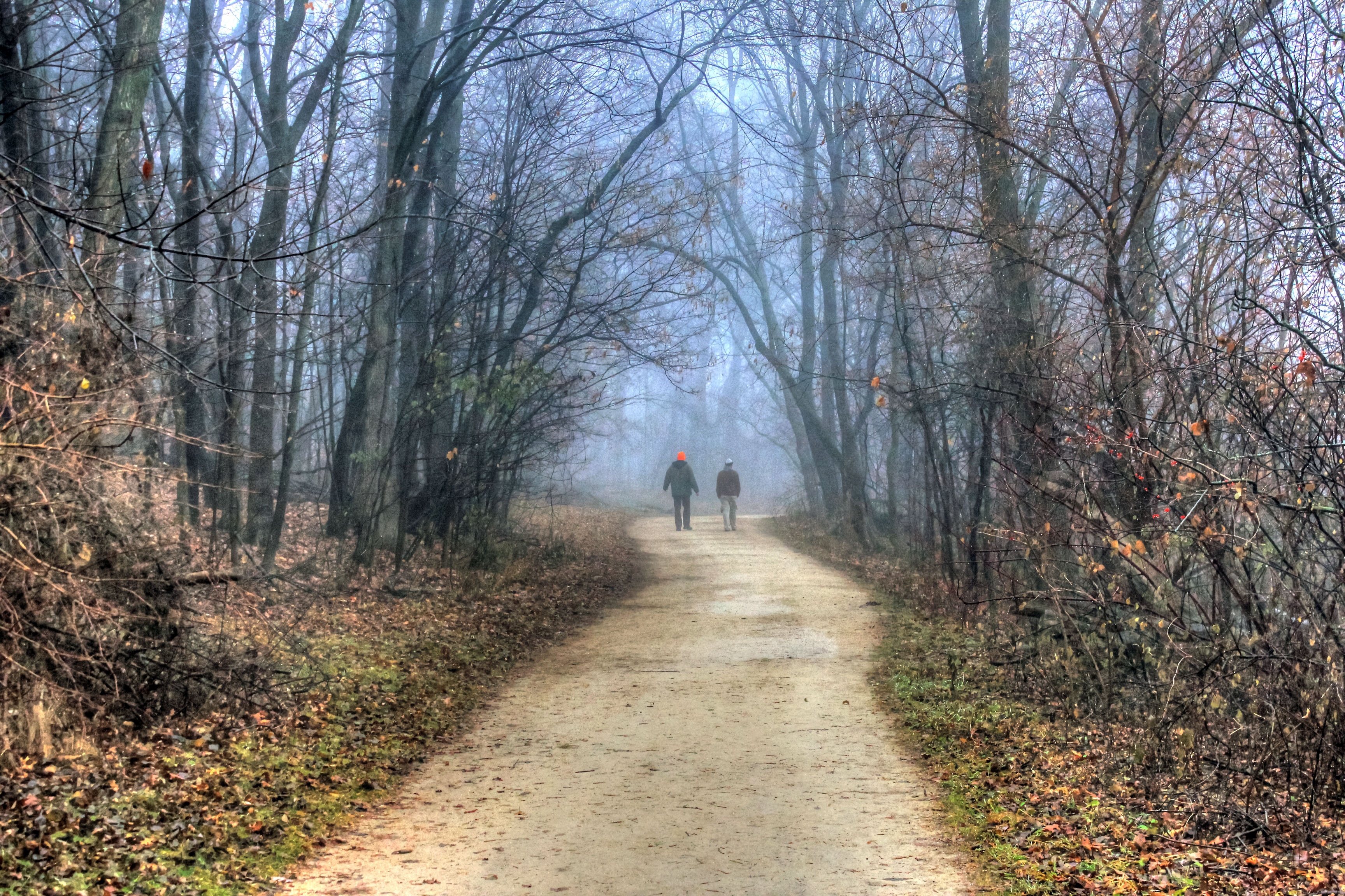 wisconsin-madison-people-walking-into-misty-forest