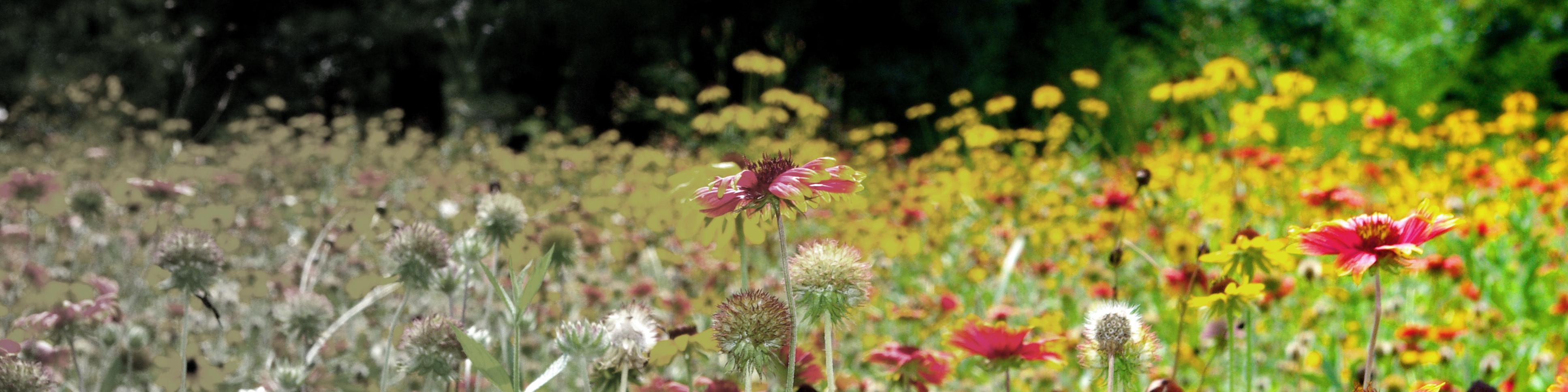 flower-field-2