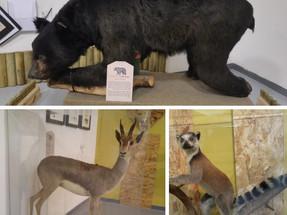 שוד העצמות: ביקור בחדר בריחה במוזיאון האדם והחי