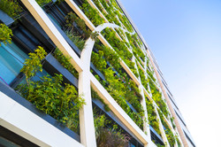 Landscape Architecture - Green wall