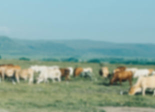 africa-agriculture-animals-1199688.jpg