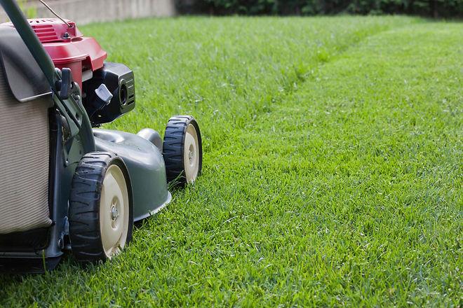 lawn03.jpg