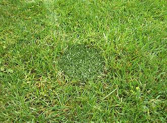Turf Insert in natual grass