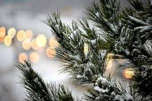 pine tree.jpeg
