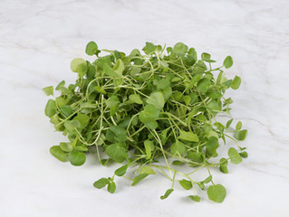 Watercress - An Early Spring Star