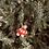 Thumbnail: Red Car