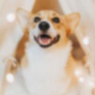 LUCINE DOG OK.jpg