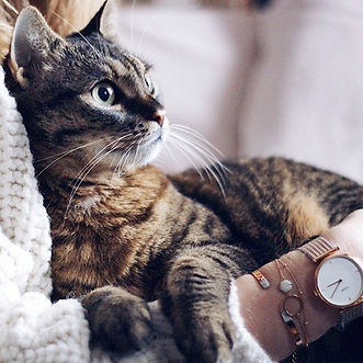 ragazza con gatto.jpg