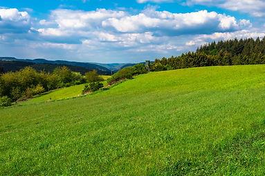 meadow-4212619_1920.jpg