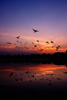 silhouette-of-mountain-and-birds-2007660