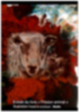 livre mouton.jpg