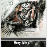 site mevy 4.jpg