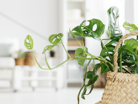Clever Design Advice for Styling with Indoor Plants