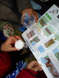 Soil survey.jpg