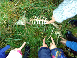 Year 2 Science - non-living (dead) objec