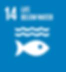 14. Life below water.png