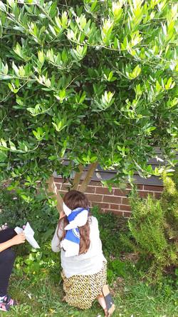 Meet an olive tree - blindfolded.jpg