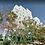 Thumbnail: Kohav Hatsafon, Tel Aviv