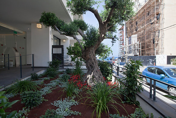 6 Gordon St. Garden Apartment