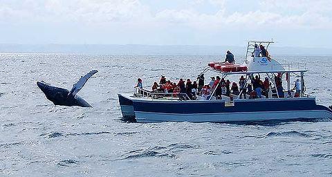 imperdivel-baleia-jubarte.jpg