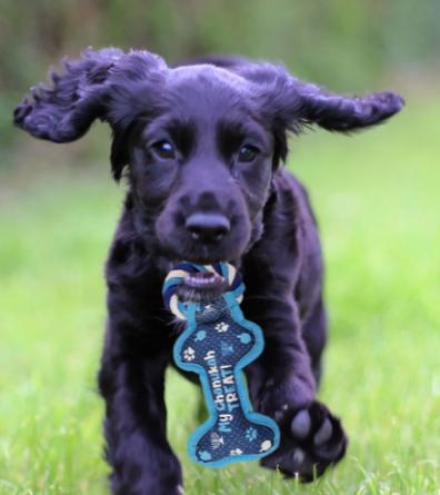 Chanukah Dog Toy