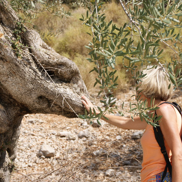 Kreta_en_Andalusië_(13)